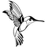 Desenho tirado mão de Colibri do esboço da tatuagem ilustração stock