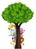 Desenhos animados animais africanos selvagens engraçados Imagens de Stock Royalty Free