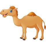 Desenhos animados bonitos do camelo Foto de Stock Royalty Free