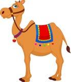 Desenhos animados bonitos do camelo Imagens de Stock Royalty Free