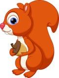 Desenhos animados bonitos do esquilo com um fundo branco Fotografia de Stock