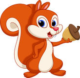Desenhos animados bonitos do esquilo com um fundo branco ilustração royalty free