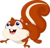 Desenhos animados bonitos do esquilo Esquilo, cor ilustração royalty free