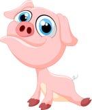 Desenhos animados bonitos do porco do bebê Fotos de Stock