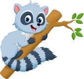 Desenhos animados bonitos do raccoon Fotos de Stock