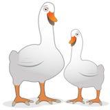 Desenhos animados bonitos do vetor do pato ilustração do vetor