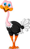 Desenhos animados da avestruz isolados Imagem de Stock