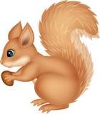 Desenhos animados do esquilo que guardam a porca Fotografia de Stock