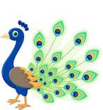 Desenhos animados do pavão Imagens de Stock