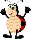 Desenhos animados engraçados dos Ladybugs Fotos de Stock Royalty Free