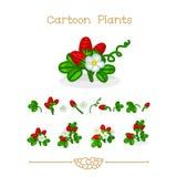 Desenhos animados: Florescendo, morango madura, crescente nos campos da morango ajustados Foto de Stock Royalty Free