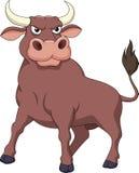 Desenhos animados fortes do touro Foto de Stock
