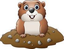 Desenhos animados Groundhog engraçado Fotos de Stock Royalty Free