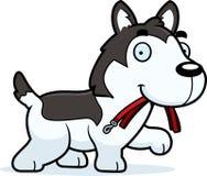 Desenhos animados Husky Leash ilustração stock