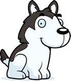 Desenhos animados Husky Sitting Foto de Stock Royalty Free