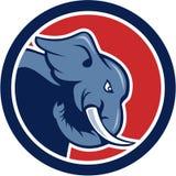 Desenhos animados irritados do círculo do lado da cabeça do elefante Foto de Stock Royalty Free