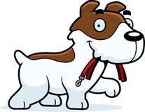 Desenhos animados Jack Russell Terrier Leash ilustração royalty free