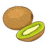 Desenhos animados Kiwi Fruit do vetor Todo e corte foto de stock royalty free