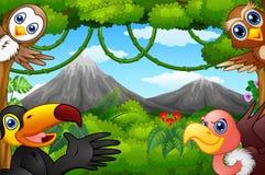 Desenhos animados selvagens dos pássaros com uma montanha em uma floresta Imagem de Stock Royalty Free