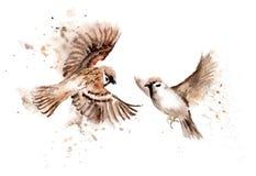 Desenhos da aquarela dos pássaros Um par de pardais crescentes ilustração do vetor