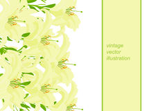 Deseniowa horyzontalna zieleń dla karty z lelują Wektorowy illustrat Fotografia Royalty Free