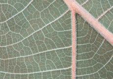 Deseniowa tło zieleń opuszcza widok od wierzchołka obraz royalty free