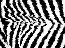deseniowa zebra Obraz Royalty Free