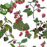 deseniowe różne jagody Obrazy Stock