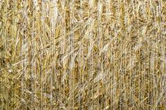 Deseniowego zbliżenia Naturalna tekstura słomiana bela zboże banatki adry powierzchnia staczająca się Obrazy Royalty Free
