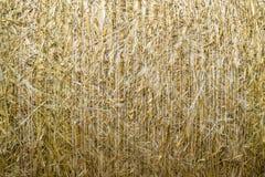 Deseniowego zbliżenia Naturalna tekstura słomiana bela zboże banatki adry powierzchnia staczająca się Zdjęcie Stock
