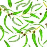 Deseniowi eukaliptusów liście, ziarna i Obrazy Royalty Free