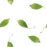 deseniowy bezszwowy warzywo Obraz Royalty Free