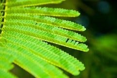 deseniowy drzewo Obraz Stock