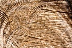 deseniowy drzewo Zdjęcia Stock