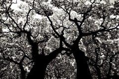 deseniowy drzewo Zdjęcie Royalty Free