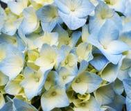 Deseniowy egzot kwitnie błękit Zdjęcia Royalty Free