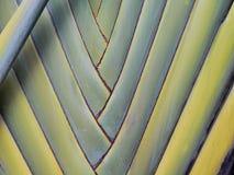Deseniowy liścia banan Obraz Stock