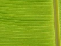 Deseniowy liścia banan Fotografia Royalty Free