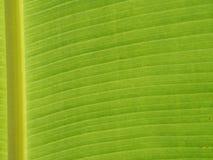 Deseniowy liścia banan Obrazy Royalty Free