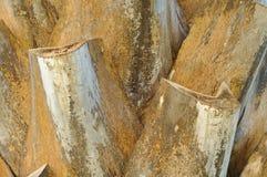 deseniowy palmy drzewo Zdjęcie Royalty Free