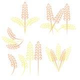 Deseniowy pszeniczny zbożowy żniwo Obraz Royalty Free