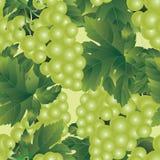 deseniują bezszwowego winogron Obrazy Royalty Free