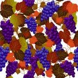 deseniują bezszwowego winogron Zdjęcie Royalty Free