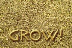 Desenvolva suas idéias da semente Fotografia de Stock