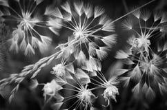 Deseos blancos y negros Fotografía de archivo libre de regalías