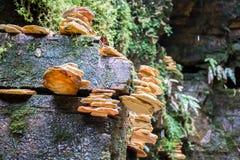 Deseos en las rocas Foto de archivo libre de regalías
