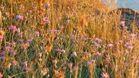 Deser-Gras auf Wind stock footage