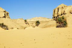 deser Sahara Zdjęcia Royalty Free