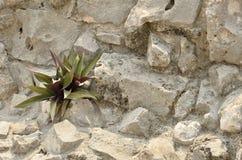 Deserowa roślina Zdjęcia Royalty Free