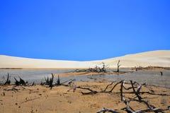 Desert. Small oasis lake at desert Royalty Free Stock Photos
